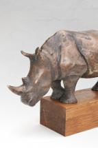 Nosorožec 5