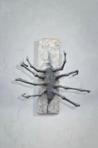 Rozšlápnutý pavouk